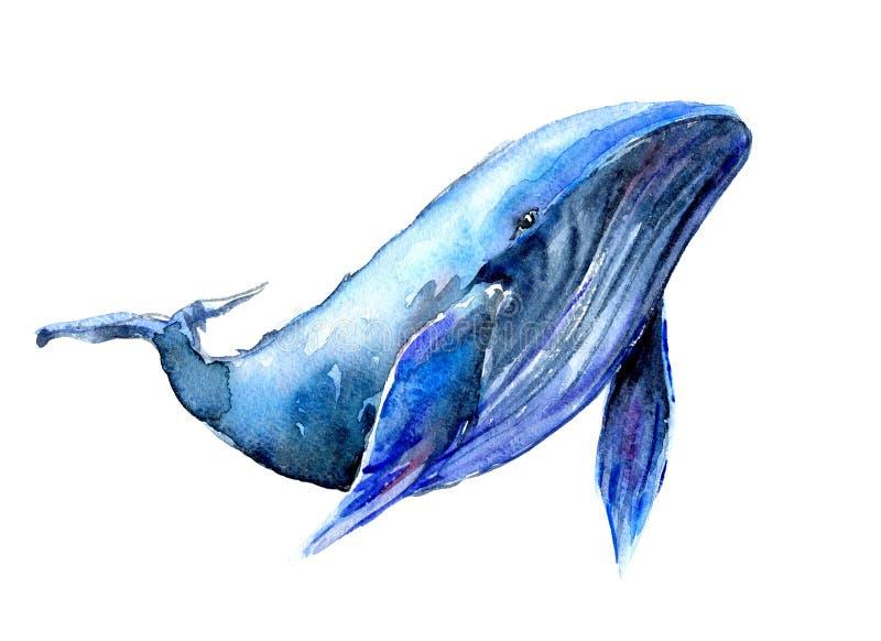 Απεικόνιση watercolor γαλάζιων φαλαινών Humpback Υποβρύχια πανίδα διανυσματική απεικόνιση