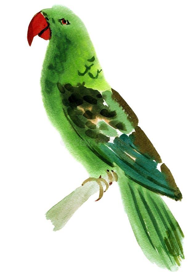 Απεικόνιση Watercolor ενός παπαγάλου πουλιών απεικόνιση αποθεμάτων