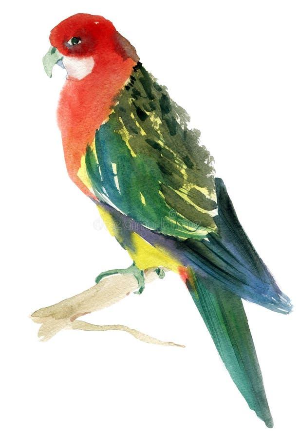 Απεικόνιση Watercolor ενός παπαγάλου πουλιών ελεύθερη απεικόνιση δικαιώματος