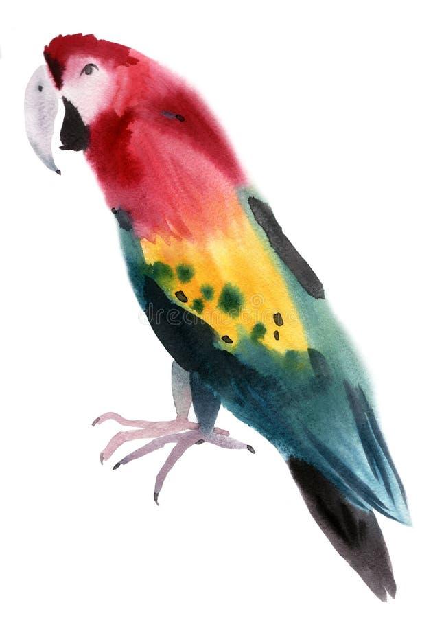 Απεικόνιση Watercolor ενός παπαγάλου πουλιών διανυσματική απεικόνιση