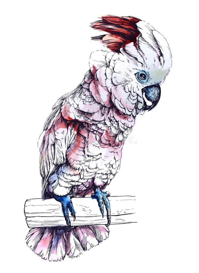 Απεικόνιση Watercolor ενός παπαγάλου Cockatoo Moluccan απεικόνιση αποθεμάτων