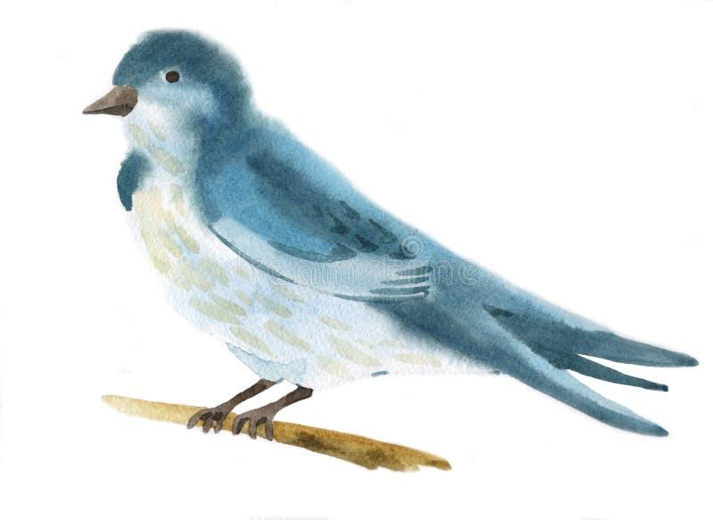 Απεικόνιση Watercolor ενός πουλιού διανυσματική απεικόνιση