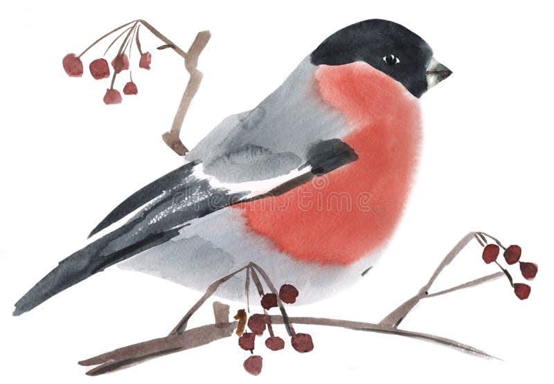 Απεικόνιση Watercolor ενός πουλιού bullfinch διανυσματική απεικόνιση