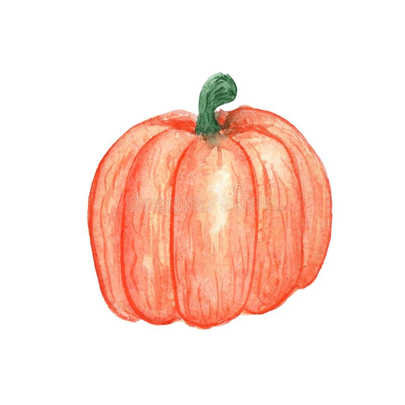 Απεικόνιση Watercolor ενός φυτικού πορτοκαλιού κολοκύθας σε ένα άσπρο υπόβαθρο ελεύθερη απεικόνιση δικαιώματος