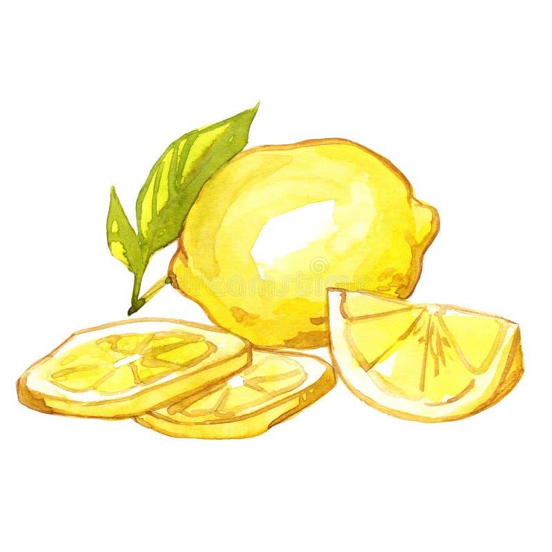 Απεικόνιση Watercolor λεμονιών στοκ εικόνες