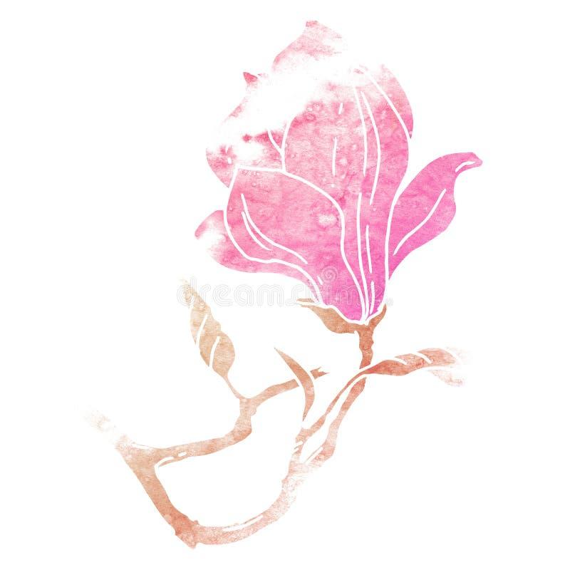 Απεικόνιση watercolor λουλουδιών Magnolia στοκ εικόνες