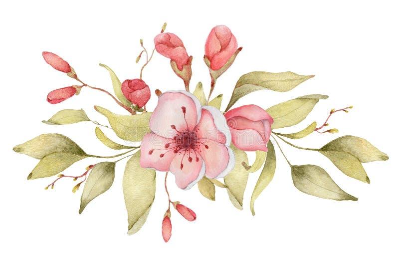 Απεικόνιση watercolor λουλουδιών Sakura Ανθοδέσμη πετάλων ανθών ελεύθερη απεικόνιση δικαιώματος