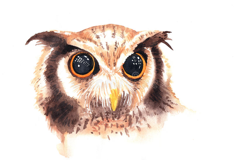 Απεικόνιση Watercolor της άγριας καφετιάς κουκουβάγιας με το όμορφο μεγάλο μάτι ελεύθερη απεικόνιση δικαιώματος