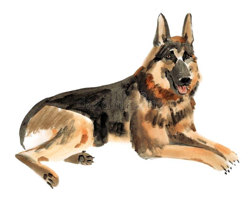 Απεικόνιση Watercolor του γερμανικού σκυλιού ποιμένων στο άσπρο υπόβαθρο διανυσματική απεικόνιση
