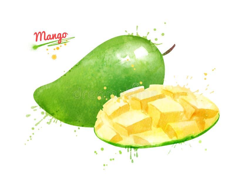 Απεικόνιση Watercolor του πράσινου μάγκο διανυσματική απεικόνιση
