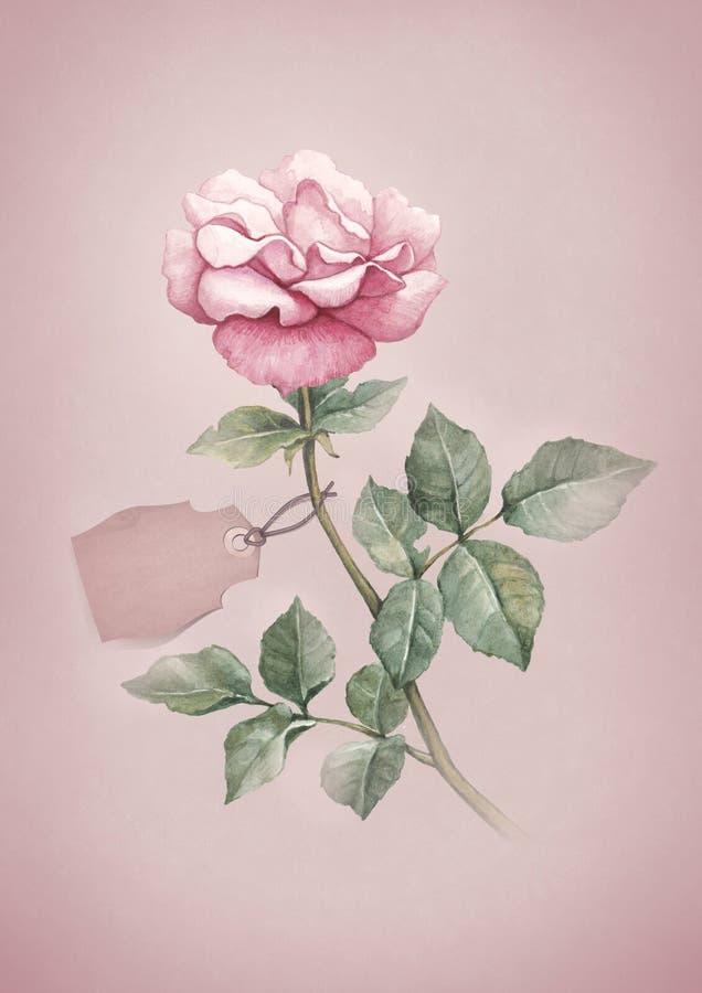 Απεικόνιση Watercolor του ροδαλού λουλουδιού διανυσματική απεικόνιση