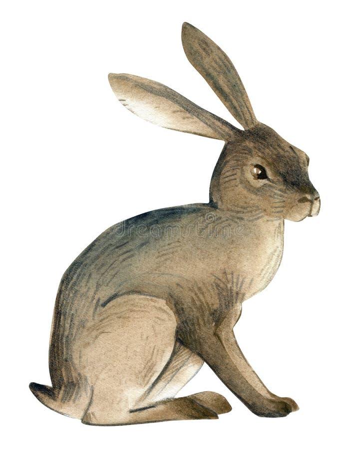 Απεικόνιση Watercolor των καφετιών λαγών στο άσπρο υπόβαθρο Ρεαλιστικό δασικό ζωικό σκίτσο διανυσματική απεικόνιση