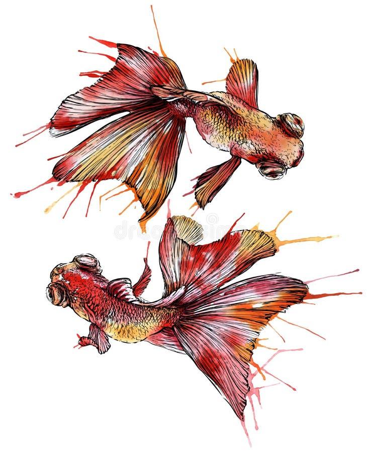 Απεικόνιση watercolor Goldfish απεικόνιση αποθεμάτων