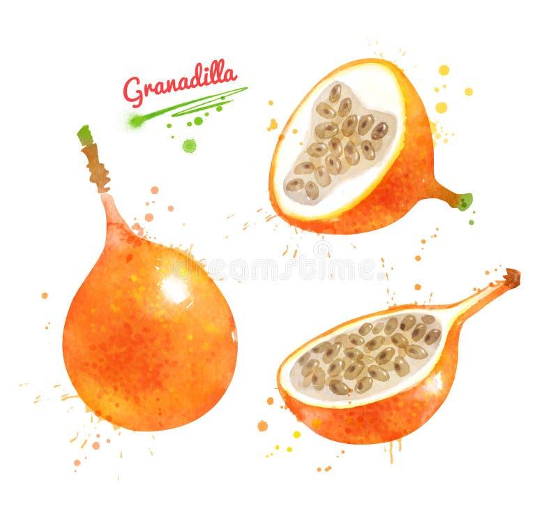 Απεικόνιση Watercolor Granadilla των φρούτων στοκ φωτογραφία