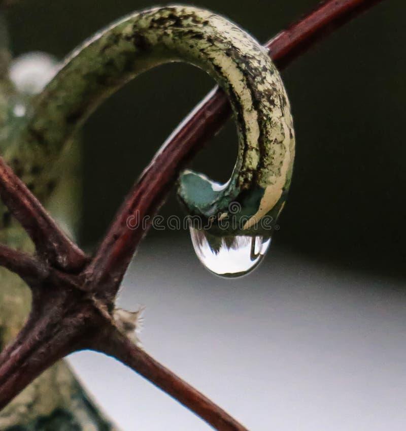 Απελευθέρωση βροχής στοκ φωτογραφία με δικαίωμα ελεύθερης χρήσης