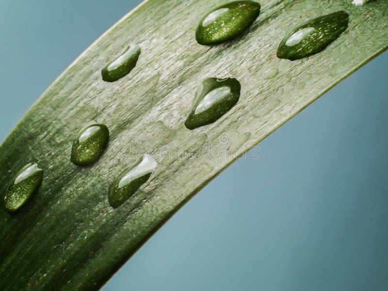 Απελευθερώσεις νερού σε ένα πράσινο φύλλο στοκ εικόνα με δικαίωμα ελεύθερης χρήσης
