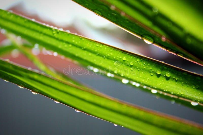 Απελευθερώσεις ύδατος στα φύλλα στοκ εικόνες με δικαίωμα ελεύθερης χρήσης