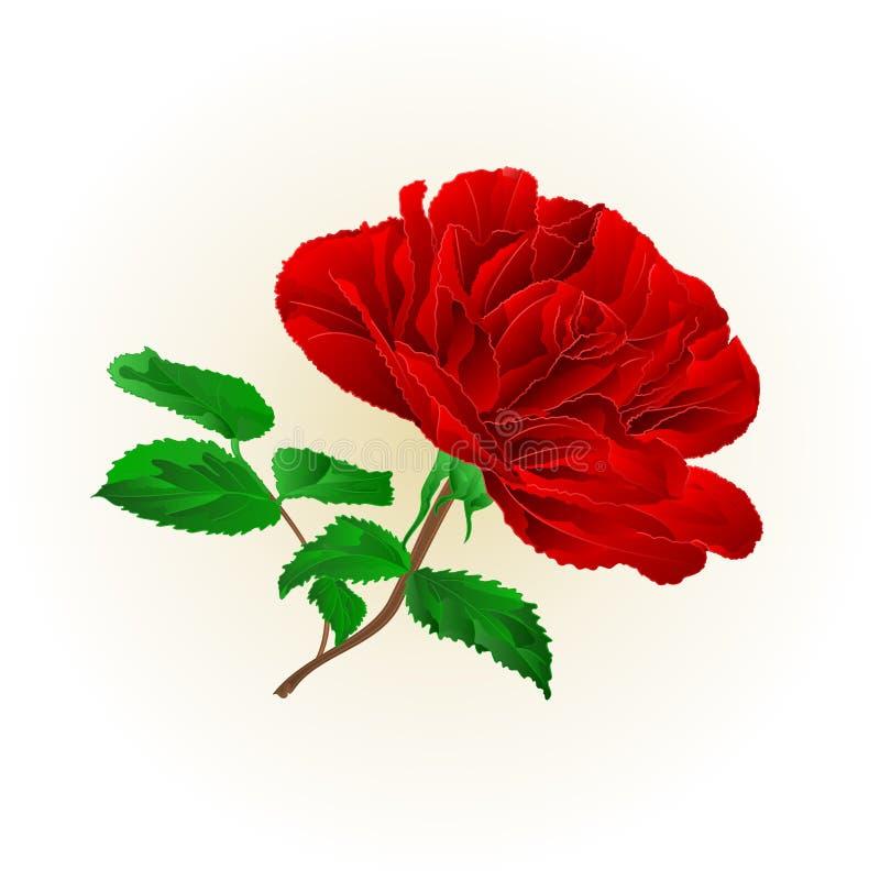 Απλός κόκκινος αυξήθηκε μίσχος με τον τρύγο φύλλων σε μια άσπρη διανυσματική απεικόνιση υποβάθρου editable διανυσματική απεικόνιση