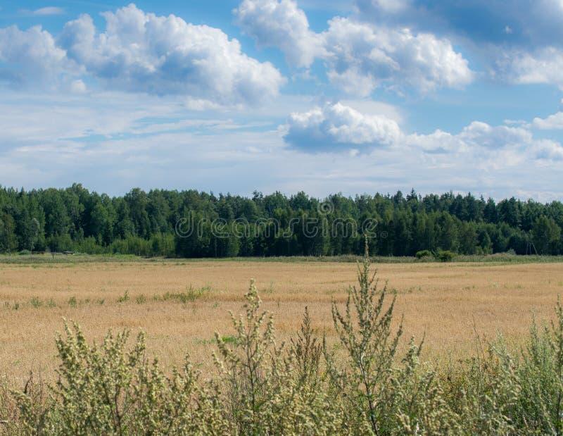 Απλό γραφικό θερινό τοπίο - ένας μπλε ουρανός και άσπρα σύννεφα πέρα από ένα πράσινο δάσος στοκ εικόνες