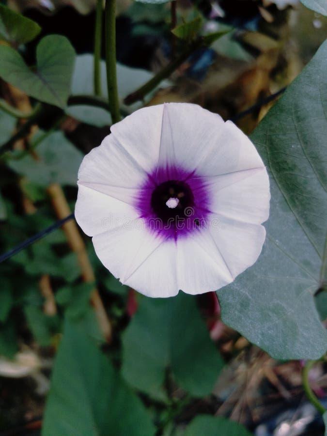 Απλό λουλούδι στοκ φωτογραφία