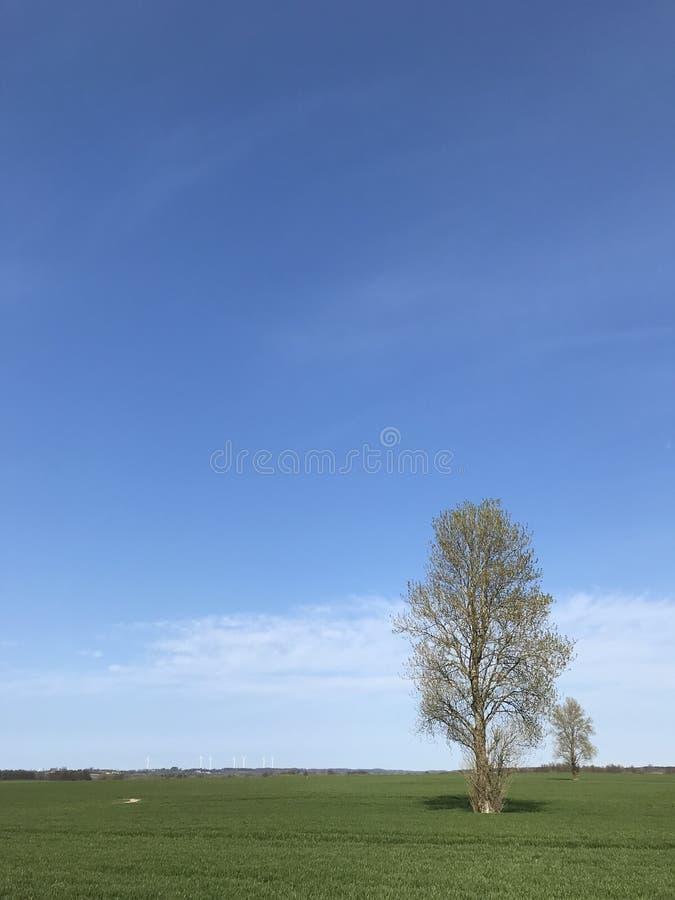 Απλό τοπίο με δύο δέντρα, τον πράσινους τομέα και το μπλε ουρανό στοκ εικόνα με δικαίωμα ελεύθερης χρήσης