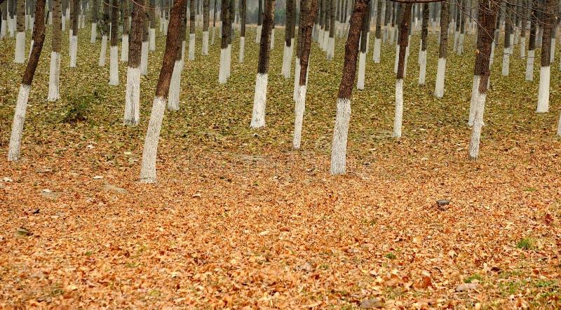 Download αποβαλλόμενα δάση στοκ εικόνα. εικόνα από δάσος, χώμα - 17051553