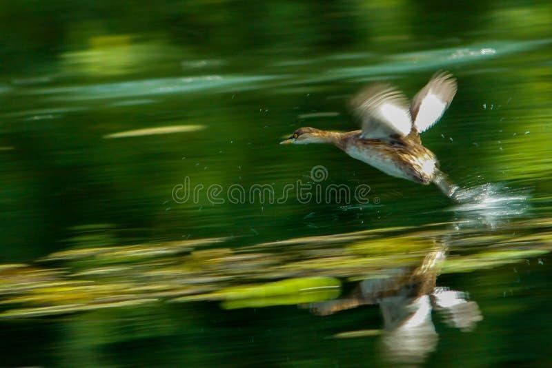 Απογείωση στοκ εικόνες με δικαίωμα ελεύθερης χρήσης