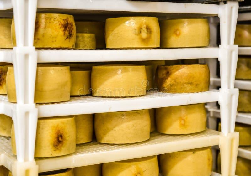 Αποθήκη εμπορευμάτων εργοστασίων τυριών με τα ράφια που συσσωρεύονται με το τυρί στοκ εικόνες