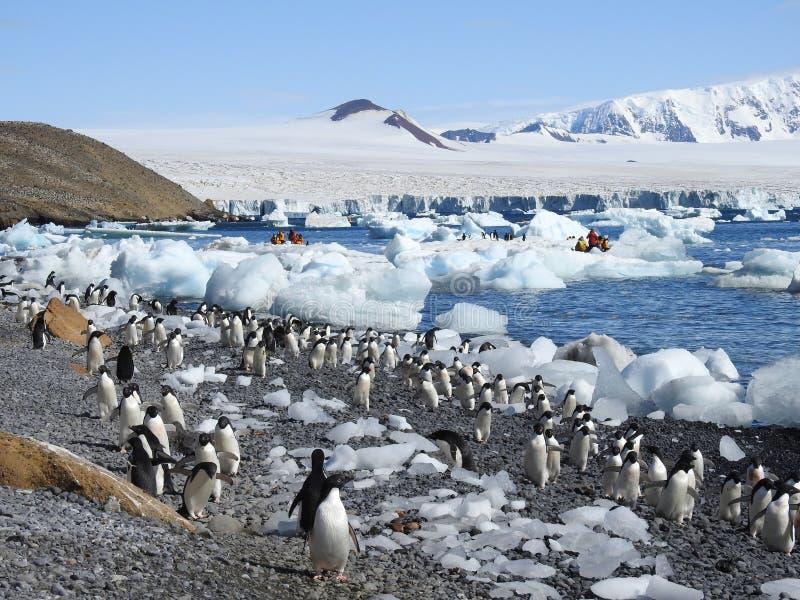 Αποικία Adelie penguins στοκ εικόνα