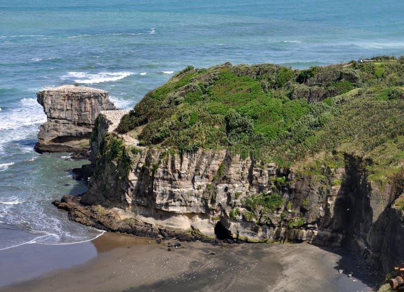 Αποικία Gannet Australasian, παραλία Muriwai, βόρειο νησί, Νέα Ζηλανδία στοκ φωτογραφία