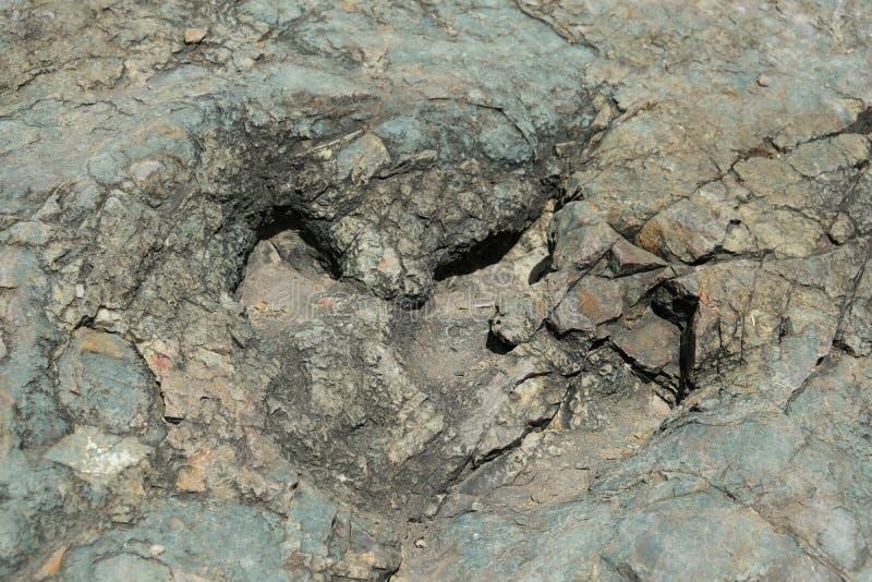 Απολίθωμα τυπωμένων υλών δεινοσαύρων στον κρατήρα Maragua boleyn στοκ εικόνες