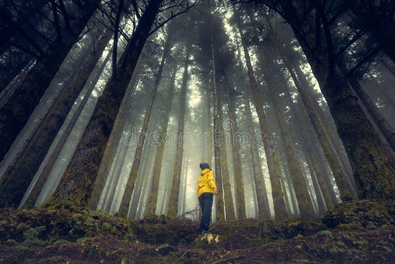 Απολαμβάνοντας το δάσος στοκ εικόνες με δικαίωμα ελεύθερης χρήσης