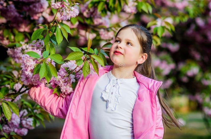 Απολαύστε τη μυρωδιά της τρυφερής ηλιόλουστης ημέρας άνθισης E Πανέμορφη ομορφιά λουλουδιών Υπόβαθρο λουλουδιών κερασιών κοριτσιώ στοκ εικόνα με δικαίωμα ελεύθερης χρήσης