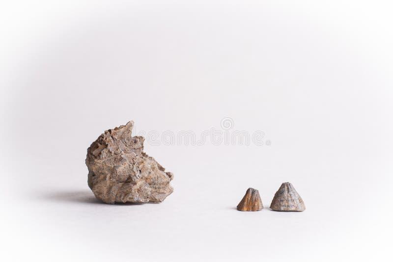 Απολιθωμένα κοχύλια στοκ εικόνα