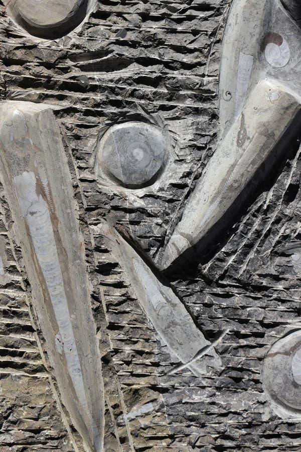 Απολιθώματα στο βράχο στοκ εικόνες με δικαίωμα ελεύθερης χρήσης