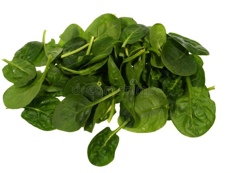 Απομονωμένα πράσινα φύλλα σπανακιού στοκ φωτογραφίες με δικαίωμα ελεύθερης χρήσης