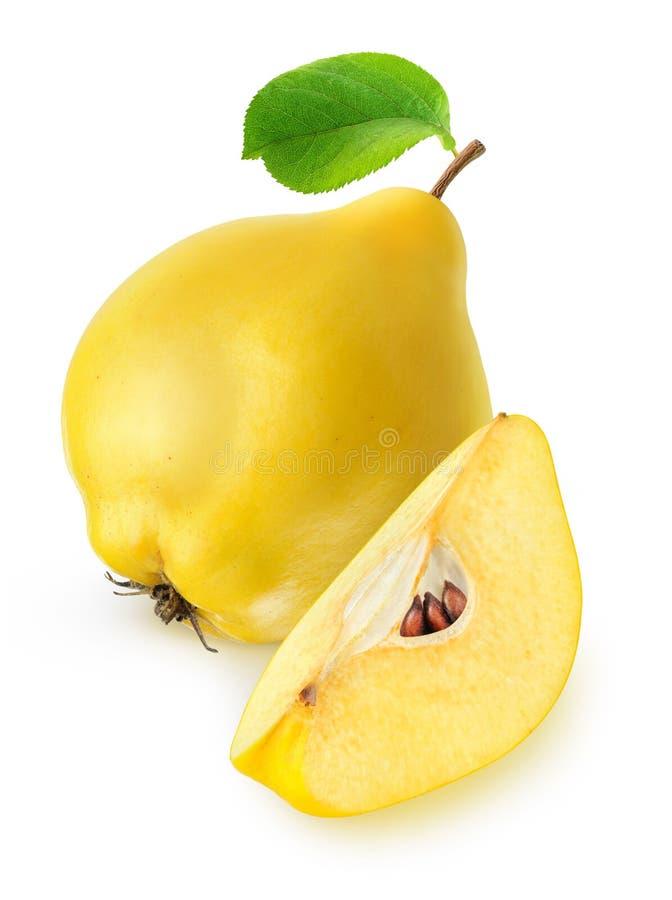 Απομονωμένα φρούτα κυδωνιών στοκ φωτογραφία
