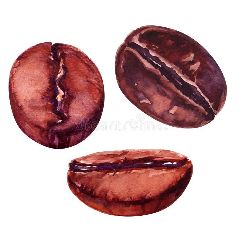 απομονωμένη ιδανικό μακροεντολή καφέ προγευμάτων φασολιών πέρα από το λευκό απεικόνιση αποθεμάτων