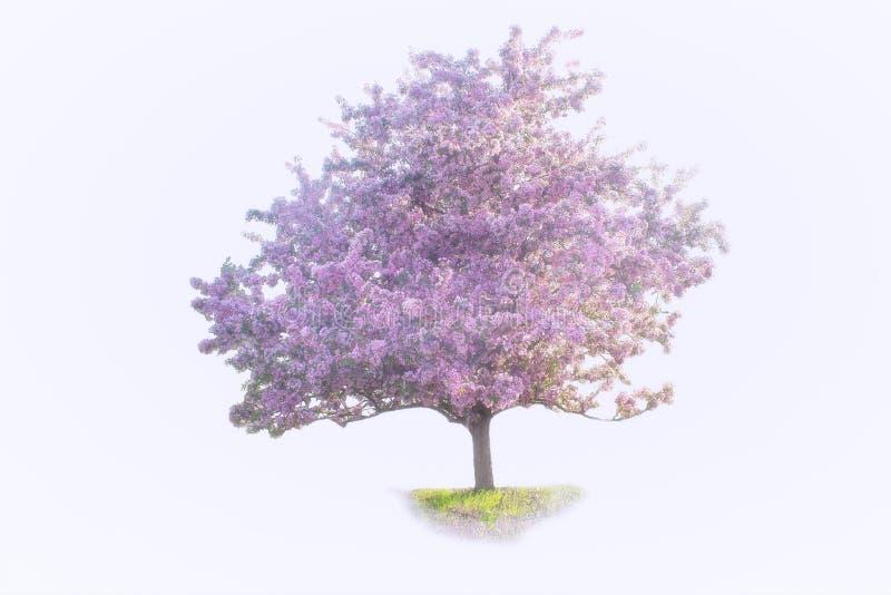 Απομονωμένη κρητιδογραφία - ανθίζοντας δέντρο της Apple στοκ φωτογραφία