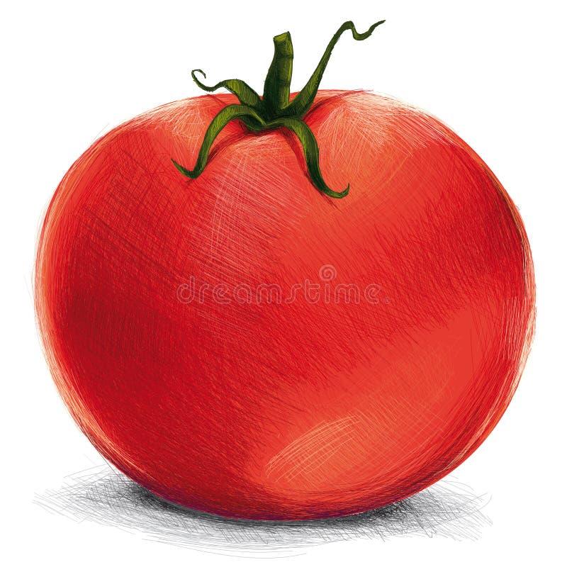 απομονωμένη ντομάτα διανυσματική απεικόνιση
