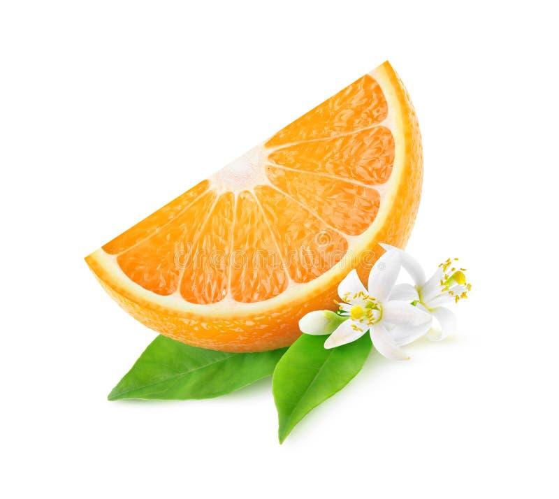 Απομονωμένη φέτα των πορτοκαλιών και πορτοκαλιών λουλουδιών στοκ εικόνες