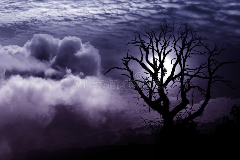 Απομονωμένη φαντασία δέντρων στοκ εικόνες