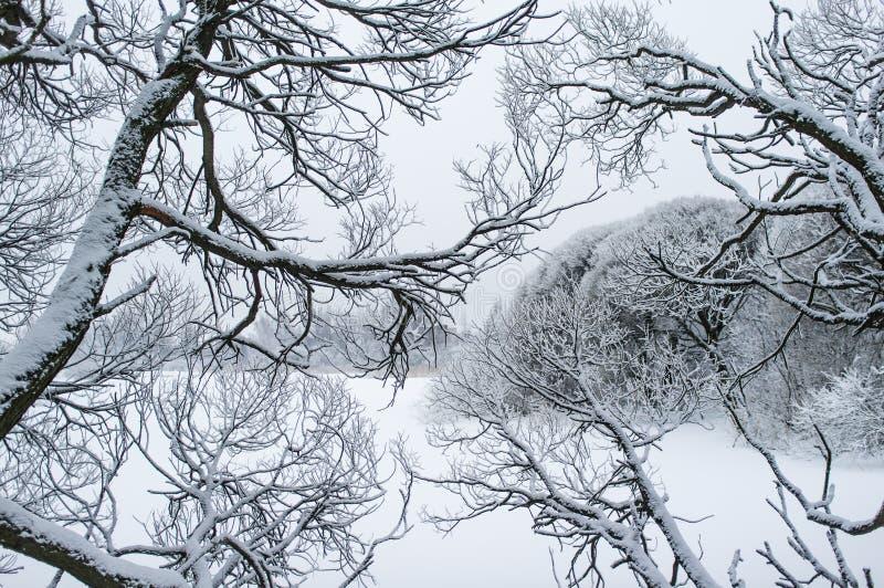 Απομονωμένοι χιονώδεις κλάδοι δέντρων στοκ φωτογραφία με δικαίωμα ελεύθερης χρήσης