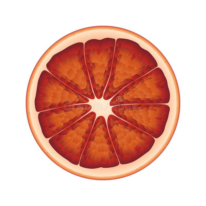 Απομονωμένος κύκλος του juicy αιματηρού πορτοκαλιού κόκκινου χρώματος στο άσπρο υπόβαθρο Ρεαλιστικός που χρωματίζεται γύρω από τη απεικόνιση αποθεμάτων