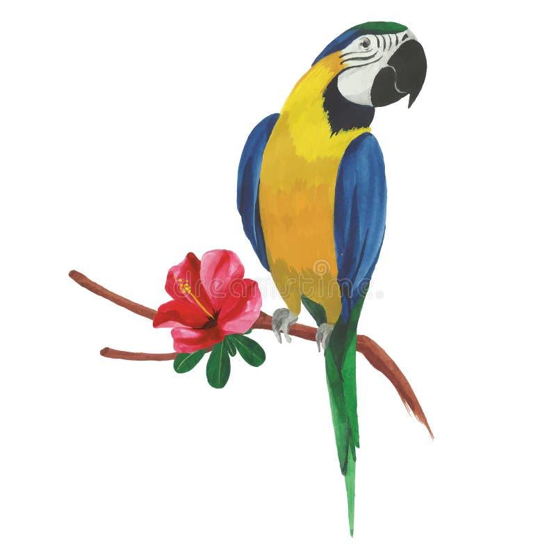 Απομονωμένος παπαγάλος watercolor με τα τροπικά λουλούδια και τα φύλλα ελεύθερη απεικόνιση δικαιώματος