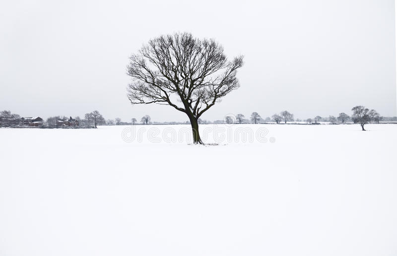 απομονωμένος χειμώνας δέν&t στοκ φωτογραφία