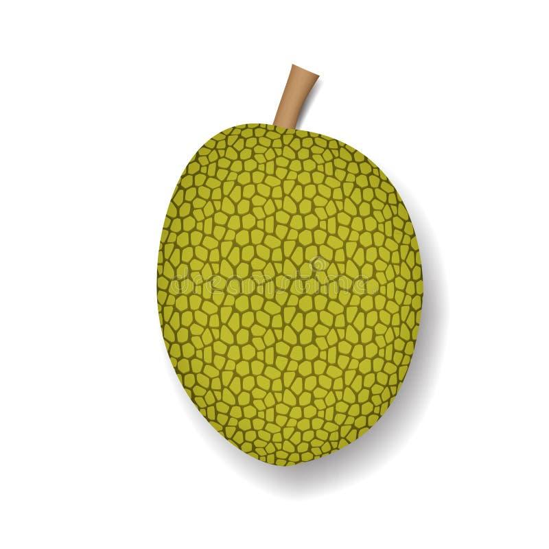 Απομονωμένος jackfruit στο άσπρο, ρεαλιστικό διάνυσμα διανυσματική απεικόνιση
