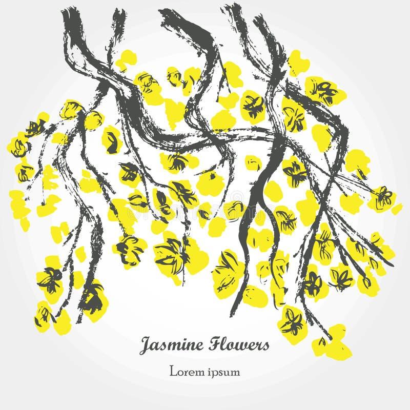 Απομονωμένος jasmine κλάδος απεικόνιση αποθεμάτων