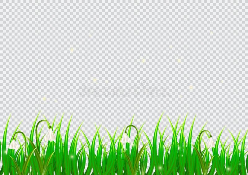 Απομονωμένο άνοιξη υπόβαθρο με τα λουλούδια snowdrop και τη ρεαλιστική χλόη apse r απεικόνιση αποθεμάτων