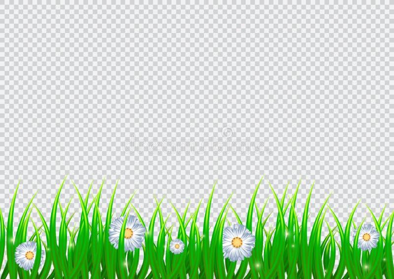 Απομονωμένο άνοιξη υπόβαθρο με τα chamomile λουλούδια και τη ρεαλιστική χλόη apse r απεικόνιση αποθεμάτων